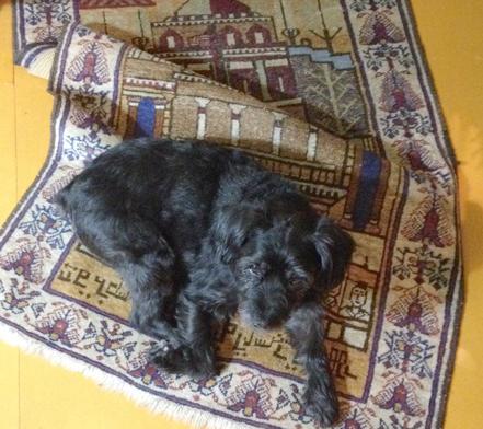 tom-rug