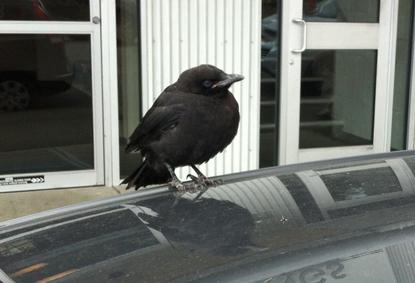 fledge1