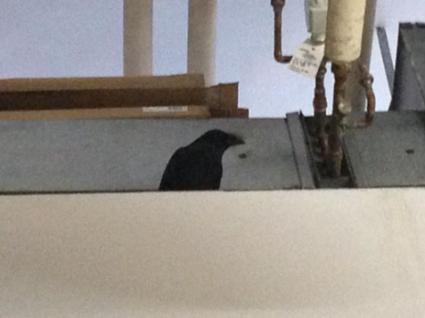 crow-ecu